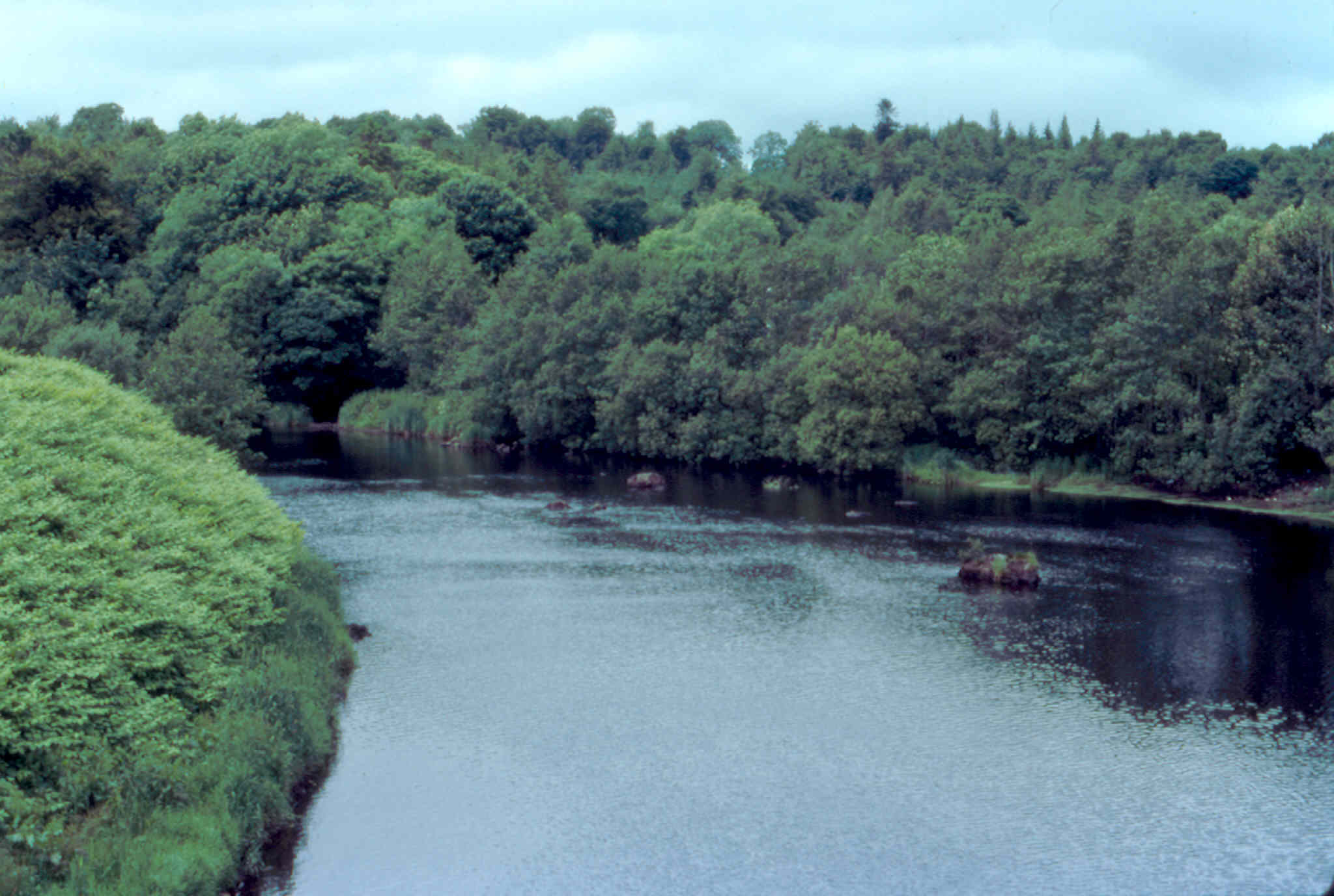 River Finn at Drumboe Woods